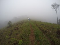 Pura neblina
