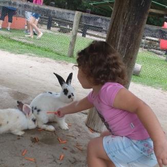Dando comida aos coelhos