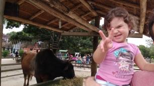 É um boi ou uma vaca?