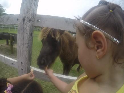 Comida para o ponei