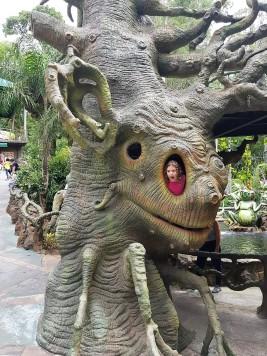 Dentro da árvore